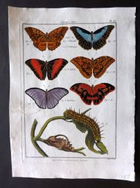 Diderot C1790 Antique Hand Col Print. Butterflies 23